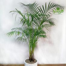 اریکا گیاهی مقاوم و زیبا در تولیدی گل صحرا