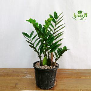 گیاهان آسان برای نگهداری
